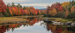 Acadia Red's (MichellePhotos2) Tags: acadia red fall autumn color maine nikon d850 nikond850 water pond reflection tree trees acadianationalpark park