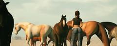 eye contact (Mara Telling:) Tags: sl secondlife horses lastdove teegle photography