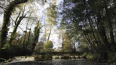 Remonter le courant. (Un jour en France) Tags: automne bois forêt rivière pont canoneos6dmarkii canonef1635mmf28liiusm cielpaysage landscape