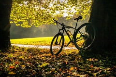 Evidence of Autumn (ianrwmccracken) Tags: sunshine autumn bicycle england newcastle city sony bike woodland morning jesmonddene urban silhouette park a6000 leaves specialized