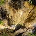 Big Cat Nap by Bob Wagener