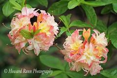 Fellows Riverside Gardens (63) (Framemaker 2014) Tags: fellows riverside gardens mill creek park youngstown ohio northeast united states america