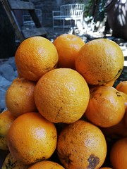 Naranjo jugoso. (BastianAlejandro) Tags: naranja naranjo color autogestion tierra jugoso luz sombra