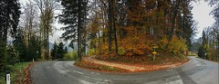 Autumn forest panorama with road in Tyrol, Austria (UweBKK (α 77 on )) Tags: österreich autumn autumnal fall herbst panorama panoramic road street tree forest tyrol tirol austria europe europa iphone