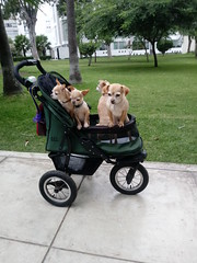 Lima - Parque Federico Blume (Santiago Stucchi Portocarrero) Tags: lima perú miraflores santiagostucchiportocarrero perros cani dog hound hund chien