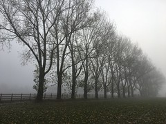An early winters morning (Andy_K_) Tags: lichfield streethay walk fence trees winter mist fog
