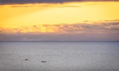 Killer whales in tonight's sunset! (Ranveig Marie Photography) Tags: spekkhogger spekkhoggere killerwhales susnet solnedgang eigerøy egersund eigersund rogaland