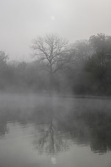 desaturated (RubyT (I come here for cameraderie!)) Tags: fujifilmxt30 xf1855 fog tree sunrise reflection lake water landscape thisisacolorphoto