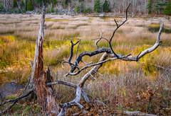 Acadia National Park 2019 (willsdad48) Tags: acadianationalpark nationalparks maine newengland woodlands nature natural landscape waterfalls november seascapes trees landscapephotography travel travelphotography nikon nikonusa nikond850 hiking