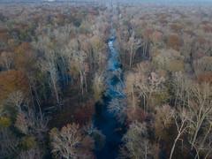 Birdseye View of the Pocomoke (maryshelsby) Tags: autumn usa delmarva drone maryland fallcolors pocomoke