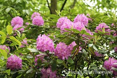 Fellows Riverside Gardens (64) (Framemaker 2014) Tags: fellows riverside gardens mill creek park youngstown ohio northeast united states america