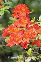 Fellows Riverside Gardens (62) (Framemaker 2014) Tags: fellows riverside gardens mill creek park youngstown ohio northeast united states america
