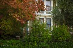 My Little Town 8 (Autumn) (buffdawgus) Tags: autumn primelens nevadacity sierranevadafoothills autumncolor lightroom6 canonef35mmf2isusm topazstudio canon5dmarkiii fall nevadacounty california