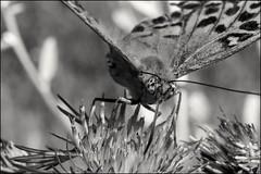 7_DSC7336 (dmitryzhkov) Tags: life moscow russia documentary dmitryryzhkov nature animal naturephotography europe animals biology wildlife wild environment macro macrophotography closeup insect spider fauna flora sony bw monochrome blackandwhite