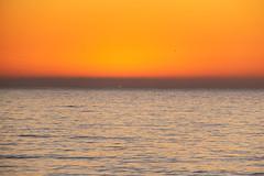 LaPurisma_Beach-7282 (af_caver) Tags: beach california mirrorless fujifilm fujifilmnorthamerica fujifilmxt10 nature landscape fujifilmmirrorless mirrorlessphotography getlost outdoor travel