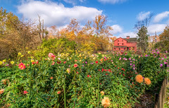 Autumn Arrives in Indiana (9) (tquist24) Tags: bonneyvillemillcountypark hdr indiana nikon nikond5300 outdoor autumn clouds dahlia dahlias fall flower flowers garden geotagged park sky tree trees