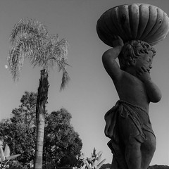 Contemplation (Rand Luv'n Life) Tags: odc our daily challenge up pov point view cherub contemplating palm tree outdoor monochrome black white