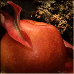 Apple Time (Romair) Tags: sliderssunday topazstudio apple rogerjohnson