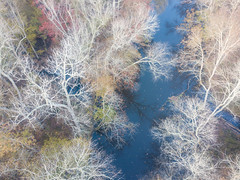 Pocomoke Abstract (maryshelsby) Tags: drone autumn pocomokeriver fallcolors delmarva maryland usa pocomoke