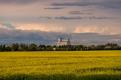 Prairie Clouds (MIKOFOX ⌘) Tags: proviaasbase landscape learnfromexif canada field grainelevator xt2 roadtrip showyourexif mikofox july summer fujifilmxt2 alfalfa alberta clouds xf18135mmf3556rlmoiswr