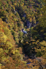 Train runs thru the tunnel cross the Naruko gorge, Miyagi, Tohoku, Japan (onion407) Tags: train railway run tunnel path bridge cross mountain stream gorge japan autumn tree forest fall season foliage yellow red maple nature leaf landscape beautiful famous travel background tourism scenery colorful beauty place holiday natural sightseeing tourist green fresh cold day road transportation park outdoor