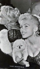 Jayne Mansfield (poedie1984) Tags: jayne mansfield vera palmer blonde old hollywood bombshell vintage babe pin up actress beautiful model beauty girl woman classic sex symbol movie movies star glamour hot icon sexy cute body bomb 50s 60s famous film kino celebrities pink rose filmstar filmster diva superstar amazing wonderful american love goddess mannequin tribute blond sweater cine cinema screen gorgeous legendary iconic black white lippenstift lipstick gezicht face oorbellen earrings dog chihuahua busty boobs décolleté jurk dress mirror spiegel
