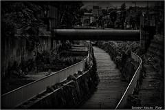 一 (SHADOWY HEAVEN) Tags: 190620wx3500010t 北海道 hokkaido 日本 ファインダー越しの私の世界 写真好きな人と繋がりたい 写真撮ってる人と繋がりたい 写真の奏でる私の世界 写真で伝えたい私の世界 coregraphy japan tokyocameraclub igers igersjp phosjapan picsjp モノクロ モノクローム モノクロ写真 白黒写真 bnwlife bnwdemand igersbnw noirshots monochrome mono monotone blackandwhite bw bnw blackwhite noiretblanc japaninbw blackwhitephotos bwartaward dark sony