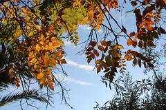 Καλημέρα! ~ Good morning! :-) (Argyro Poursanidou) Tags: leaf leaves foliage nature colorful autumn sky φύση φύλλα φθινόπωρο ελλάδα yellow κίτρινο