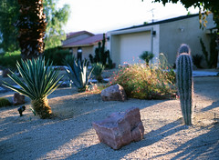 Palm Springs, California (bior) Tags: palmsprings road sunset dusk bluehour pentax645nii velvia mediumformat 120 cactus cacti yard