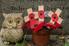 A Small Memorial (sharongellyroo) Tags: bulmer poppies standrews grave memorial essex messentsetc