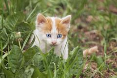 IMG_2878 (Pablo_sc) Tags: coth5 cat cats gato michi canon canont6 canon1300d dslr eost6 eos 55250mm efs ef eos1300d
