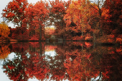 A Reverie of Dreams (Northernstar28**) Tags: mortonarboretum autumn leaves pond chicago trees landscape dreams autumncolor autumnlandscape autumntrees autumnwoods autumnfoliage