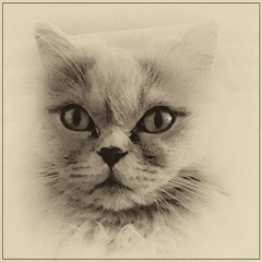 Cat -3- (Jan 1147) Tags: cat kat dieren animals lovendegem belgium img20191015