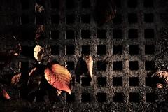 leaves and holes (Sat Sue) Tags: olympus micro four thirds m43 japan fukuoka