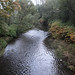 Skykomish River at Al Borlin Park