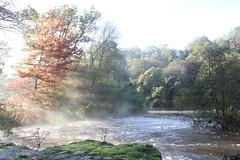 Good morning (rr18989) Tags: ray rayon river rivière matin lumière sèvre light evrunes soleil trait lever brume frog sunrise