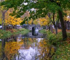 In Dublin's Fair City where the canal is so pretty (sineid2009) Tags: dublin grandcanal trees fall colour ireland water autumn