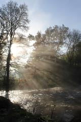 Sun rise (rr18989) Tags: mist frog river sunrise ray off light trait de lumière brume lever soleil rivière sèvre