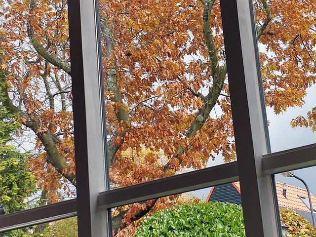 De herfst verfst het blad
