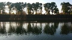 白鳥 (Architecamera) Tags: snap swan sunset tokyo