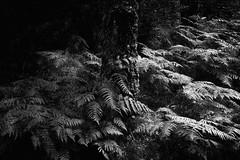 08_Août_2019 (_mosto__) Tags: blackandwhite bnw bnwphotography blackwhite bw noiretblanc arbres tree monochrome olympus