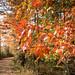 1 1 Beaverbrook trail-3