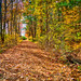 1 1 Beaverbrook trail-2