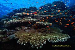 Beautiful Reef (kayak_no1) Tags: nikon d800e nauticamhousing 15mmsigmafisheye fisheye ysd1 underwater underwaterphotography wa wideangle diving scubadiving uw reasea outside water nature blue green sea landscape