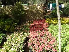 معرض أزهار الخريف بالخرطوم 2019