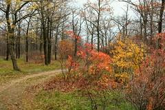20191110093009_IMG_0473 (molokoimed) Tags: autumn odessa