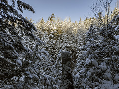 Morning Light Illuminates The Forest Canopy (TheNovaScotian1991) Tags: easternhemlock snowcovered freshsnow bluesky trees forest woods mountains googlepixel3xl raw beautiful novascotia victoriapark canada colchestercounty outdoor landscape winter november truro cool