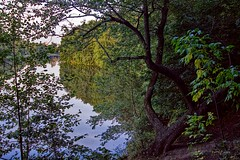 Tree ashore (olaf_alien) Tags: russia moscow kuzminkipark landscape lakescape lake pond water flora nature reflection dark tree bush ground grass forest wood leaves green autumn nikon d3200 nikkor 1200 2400 mm f40 ashore olafalien lyublino district natureandnothingelse
