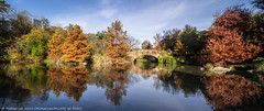 Central Park Pond (20191109-DSC08636-Pano) (Michael.Lee.Pics.NYC) Tags: newyork centralpark pond gapstowbridge autumn fall reflection shiftlens panorama architecture cityscape sony a7rm4 laowa12mmf28 magicshiftconverter