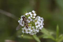 Insecte (frankastro) Tags: champignons nature